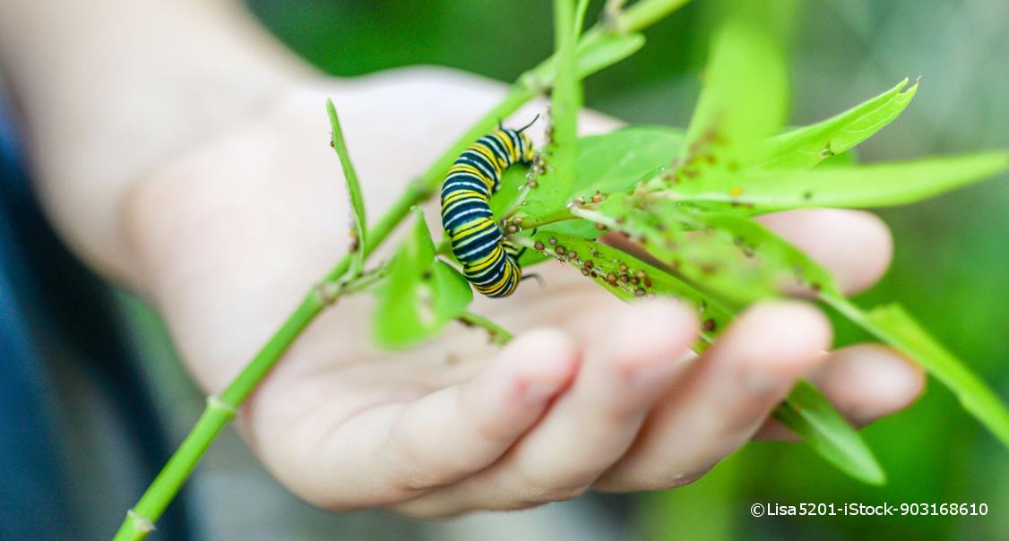Erst Raupe Dann Schmetterling Lingo Das Mit Mach Web