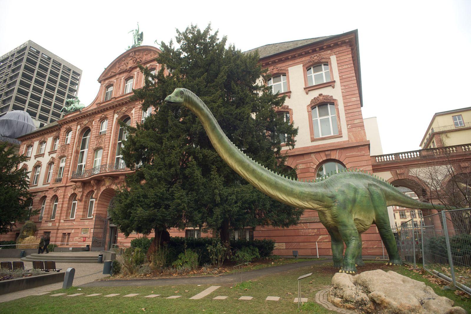 Dino Frankfurt