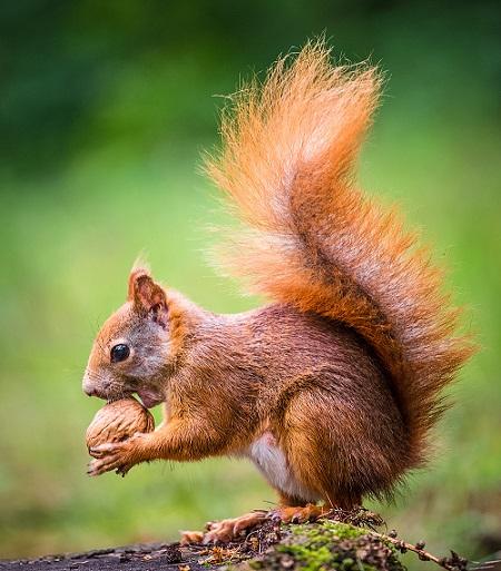 das eichhörnchen  lingo  das mitmachweb