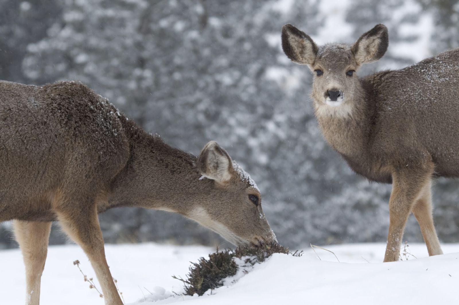 Tiere im Winterwald | ...